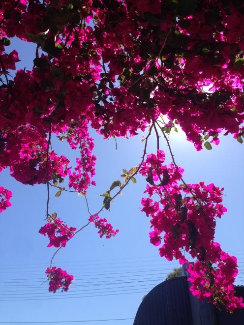Australian Spring