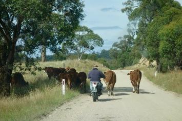 Natural traffic