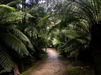 Fern tree forest